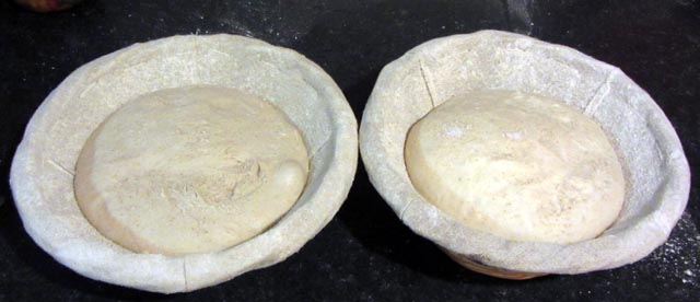 doughs 001 small