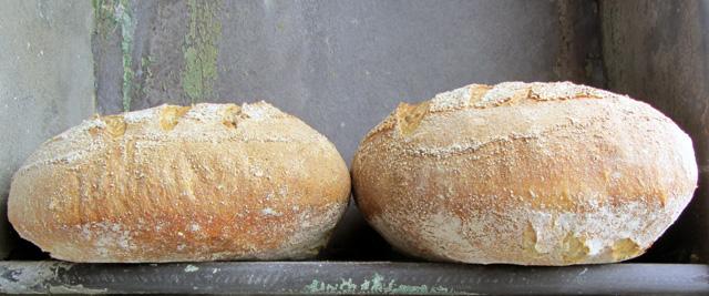 crust 001 small